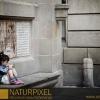 Naturpixel_Born_008
