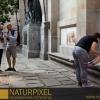 Naturpixel_Born_010