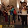 Naturpixel_Born_023