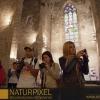 Naturpixel_Born_024
