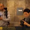 Naturpixel_Born_028
