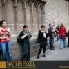 Naturpixel_Born_030