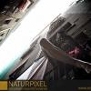 Naturpixel_Born_038