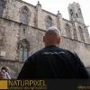 Naturpixel_Born_001