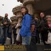 Naturpixel_Fotowalk_Guell_07_05_2011_008