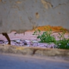 Naturpixel_FWB2_20121201_020
