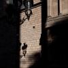 Naturpixel_curso_de_fotografia_fotowalk_born_2011_01_14_034