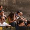 Naturpixel_FWBorn_2011-07-16_006