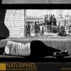 Naturpixel_FWBorn_2011-07-16_020