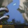 Naturpixel_FWBorn_2011-07-16_027