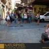 Naturpixel_Gracia_009