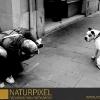 Fotowalk_Gracia_16_04_2011_013
