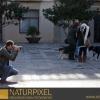 Naturpixel_Gracia_017