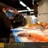 Naturpixel_Gracia_030