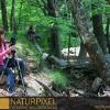 Naturpixel_Montseny_038_04