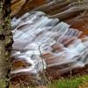 Naturpixel_Montseny_039