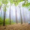 Naturpixel_Montseny_010