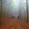Naturpixel_Montseny_015