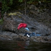 2nd prize Spot News Stories Niclas Hammerström, Sweden, for Aftonbladet Utøya, Norway, 22 July Trying to avoid the killer's bullets, many people jumped into the cold water. Anders Behring Breivik killed 69 people on 22 July on the small island of Utøya outside Oslo in Norway.