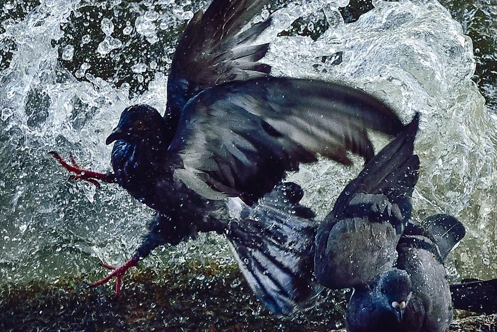 Spashing birds