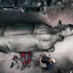 9 españoles preseleccionados para los Sony World Photography Awards 2014