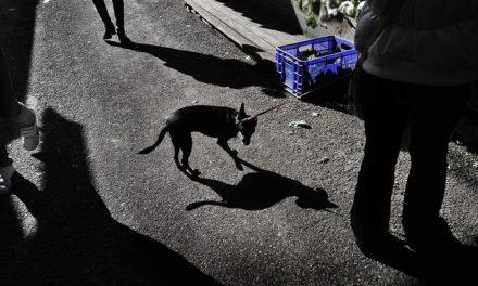 Caja Azul. Tercera edición: Fotoperiodistas en zonas de conflicto: situaciones y límites