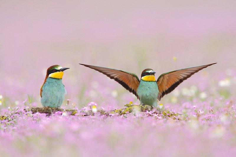 Ya conocemos los premiados del concurso de fotografía de naturaleza FotoCAM 2011