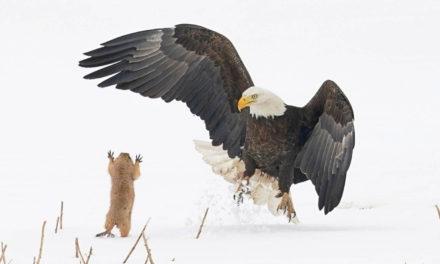 Comedy Wildlife Photography Awards 2021, los finalistas.