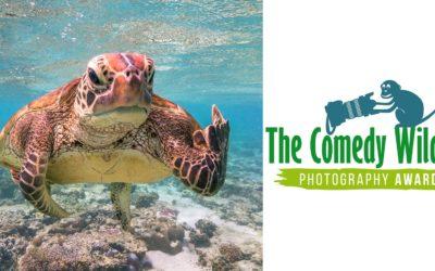 Los ganadores de los Comedy Wildlife Photography Awards 2020
