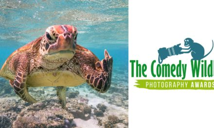 Los ganadores de los Comedy Wildlife Photography Awards 2020