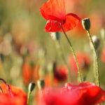 Consejos para hacer fotos a flores