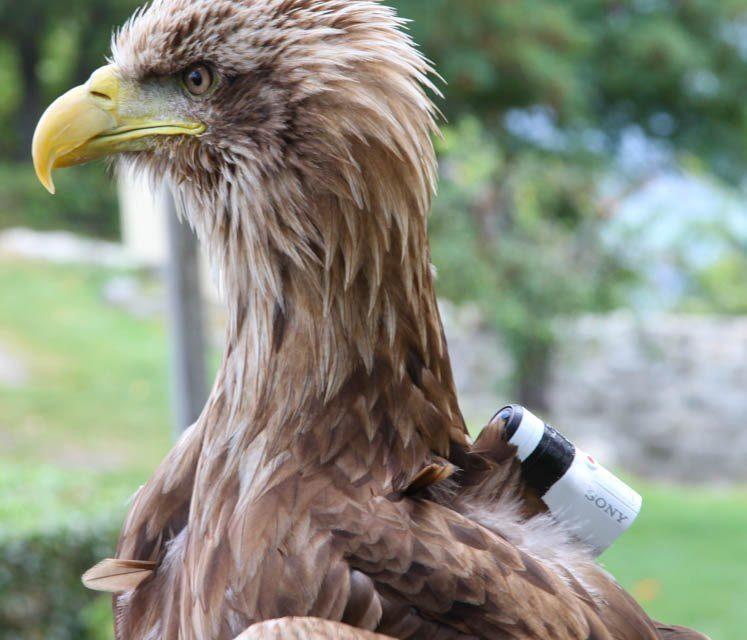 París a vista de águila con la Action Cam Mini