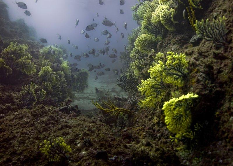 Entrevistas a Fotógrafos: J.Pablo Herrero Eggart, el fotógrafo de las profundidades