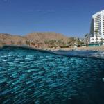Gran Premio Epson de Fotografía Submarina