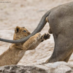 Los premios de fotografía Comedy Wildlife 2019 ya tienen ganadores