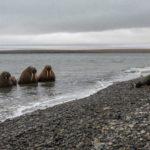 Consejos para fotografiar en la naturaleza, por Alexey Ebel