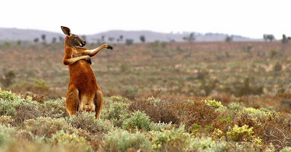 Animalitos y humor, son los premios de fotografía Comedy Wildlife 2017