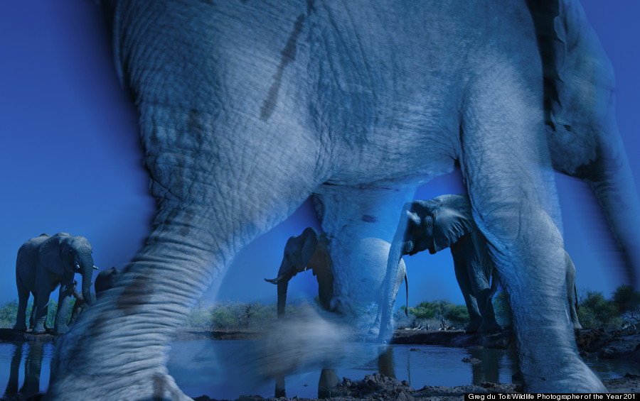 Wildlife Photographer of the Year 2013