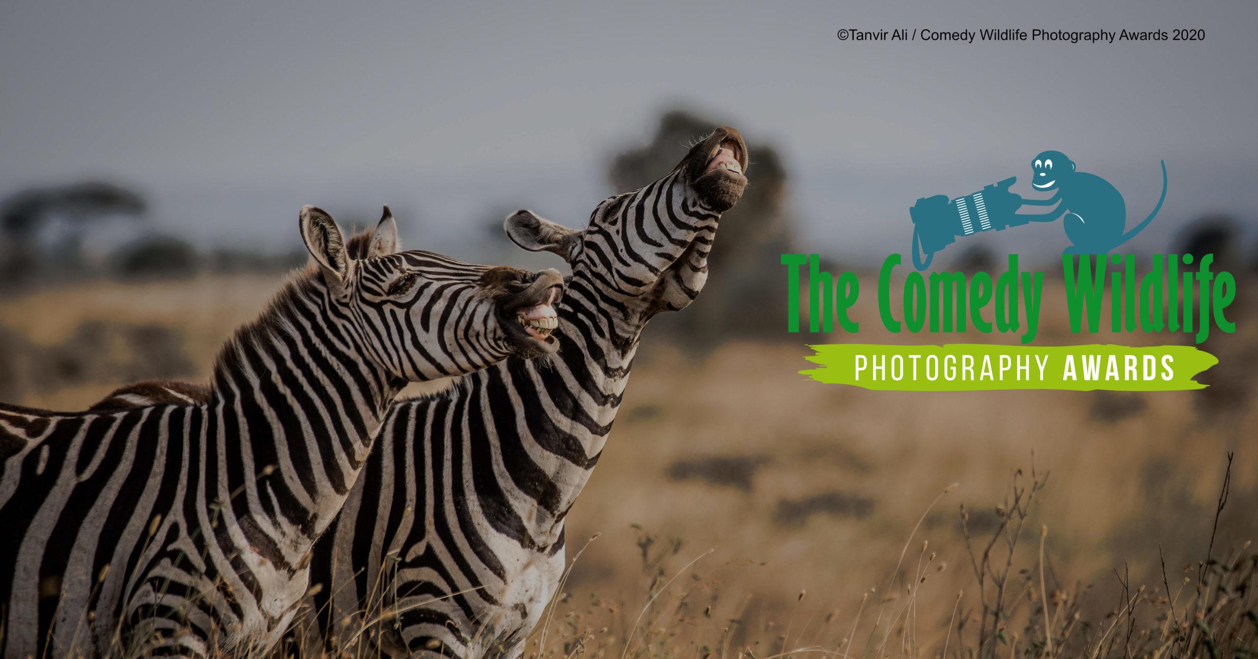 Comedy Wildlife Photography Awards 2020 amplia fechas y nos muestra algunas de las mejores fotos