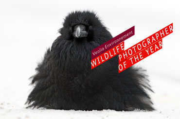 Ganadores del Veolia Environnement Wildlife Photographer of the Year