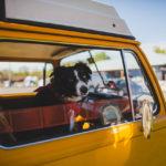 Mascotas y dueños – Fotografías de Zachary Rose #Petheadz